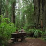 Dog Friendly Redwoods Activities: A Complete Guide