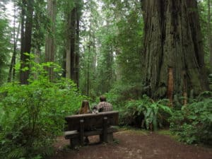 Dog Friendly Redwoods Hike