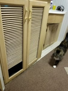 Washer Dryer Cabinet and Cat