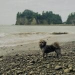 Dog Friendly Olympic Peninsula Vacation Guide