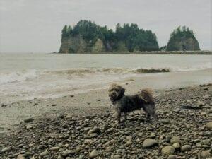 Dog Friendly Beach Olympic Peninsula