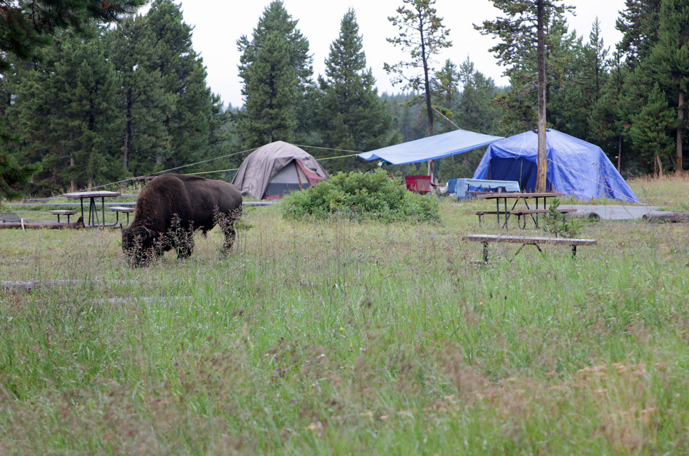 Yellowstone Campground