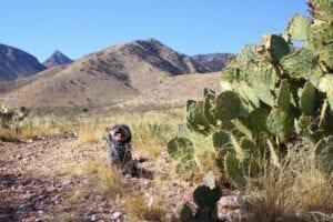 Dog Friendly Vacations Arizona