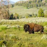 Yellowstone Campgrounds: A Complete Guide to RV and Tent Camping