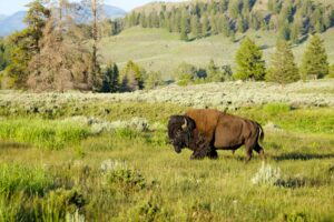 Yellowstone Campgrounds