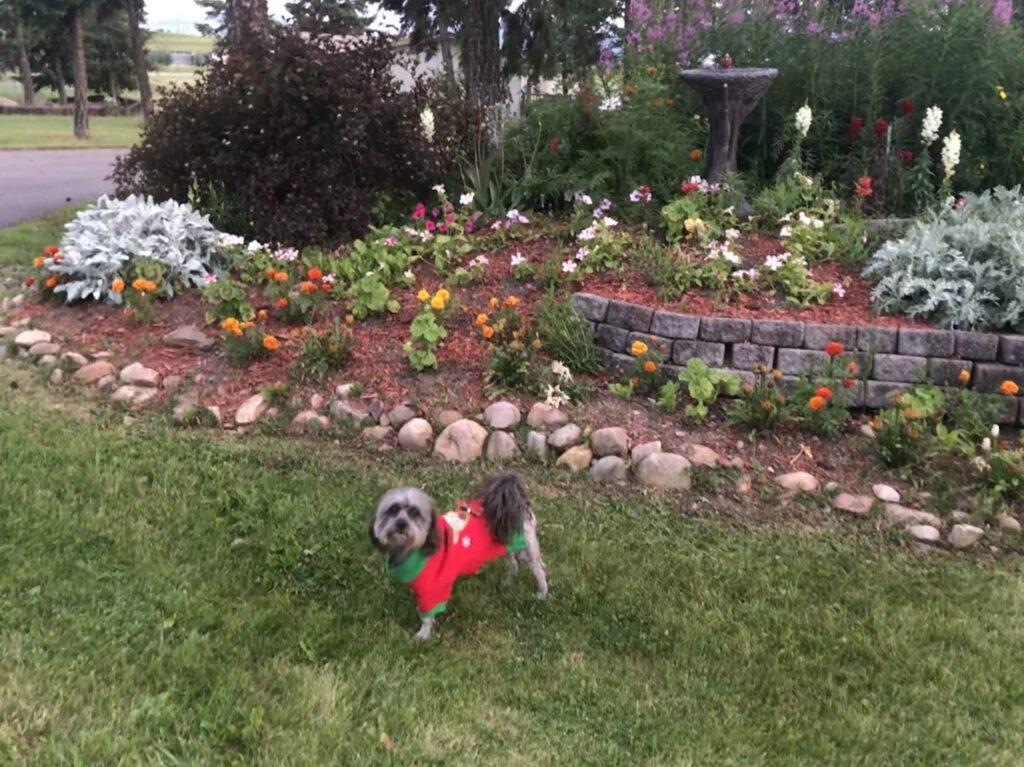 Dog at Jim and Mary's RV Park