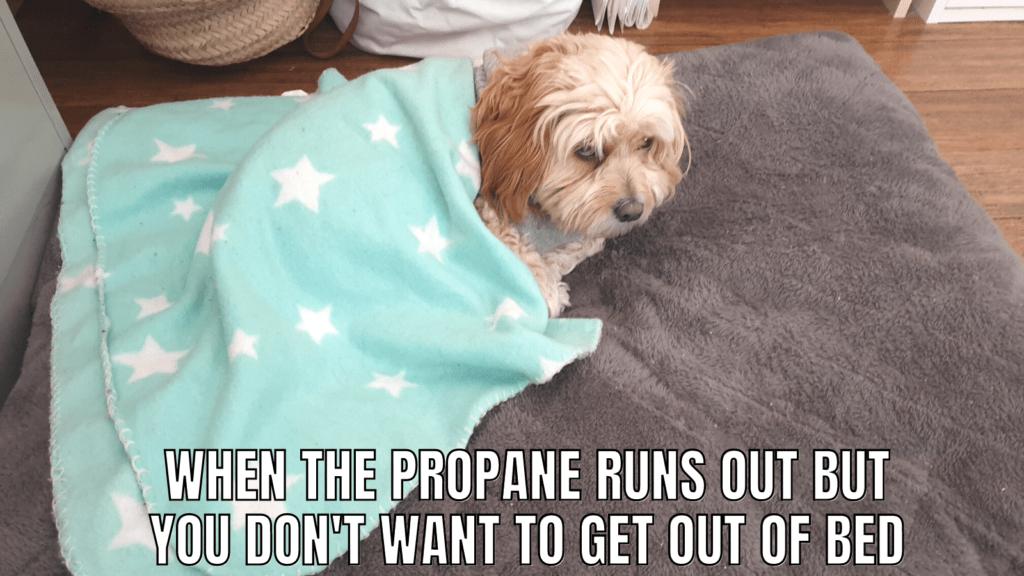 Funny RV Camping Memes: RV Dog