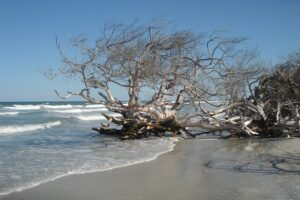 Best Florida State Parks for RV Camping: Little Talbot Island