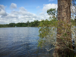 Best Florida State Parks for RV Camping: Rocky Bayou