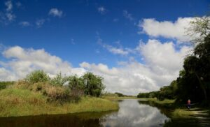 Best Florida State Parks for RV Camping: Myakka River State Park