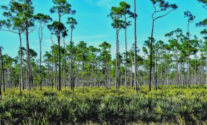 Best Florida State Parks with RV Camping: Jonathan Dickinson