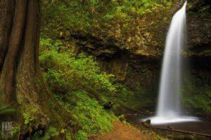 Best Dog Friendly Hikes in Oregon: Latourell Falls