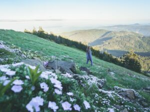 Best Dog Friendly Hikes in Oregon: Marys Peak