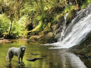 Best Dog Friendly Hikes in Oregon: Green Peak Falls