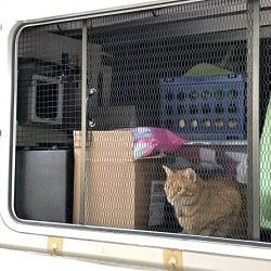 RV Modifications for Cats Custom Screened In Cat Patio