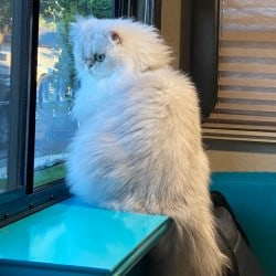 RV Modifications for Cats Window Perch with White Cat