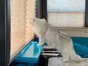 RV Modifications for Cats