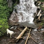 Best Dog Friendly Hikes in Oregon: 12 Hikes to Bark About