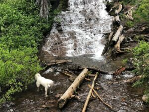 Best dog friendly hikes in Oregon