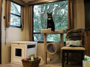 RV Living with Cats: Special Cabinets can Hide a Litter Box