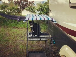 RV Living with Cats: Metal Kennels are Safe & Secure