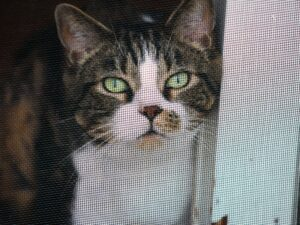 RV Living with Cats: Keep Screen Doors Locked
