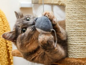 RV Living with Cats: Keep Favorite Toys