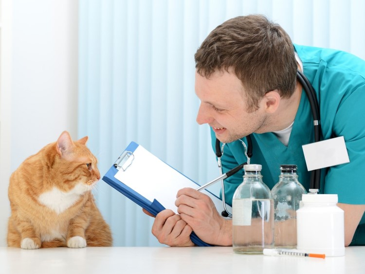 RV Living with Cats: Check Vet Reviews Online